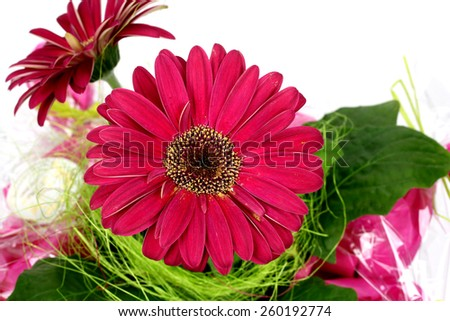 red flower in pink pot on white background - stock photo