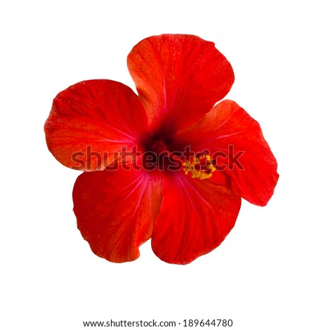 Red flower isolated on white background