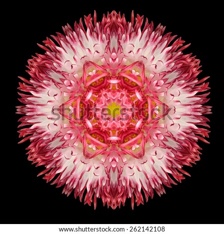 Red Flower Mandala. Kaleidoscopic design Isolated on Black Background. Mirrored pattern - stock photo
