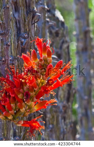 Red flower on cactus stem - stock photo