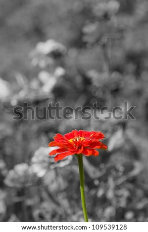 Red flower on grey background - stock photo