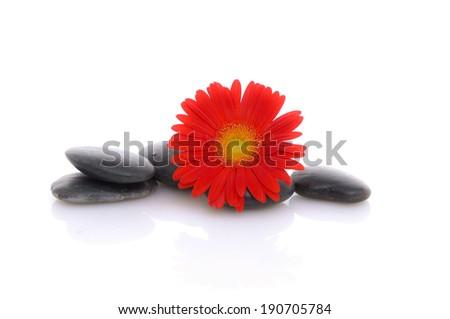 red flower on zen stones - stock photo
