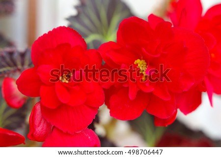 Red flower pot home isolated on white background