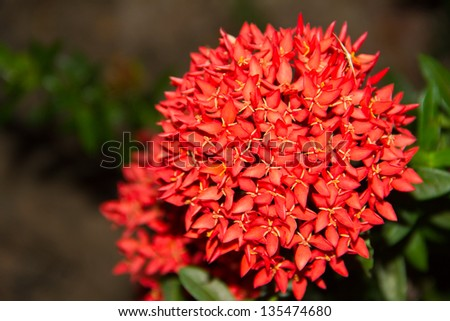 Red flower spike - stock photo