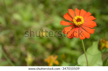 Red flower yellow stamen out focus stock photo royalty free red flower with yellow stamen with out of focus green background asia mightylinksfo