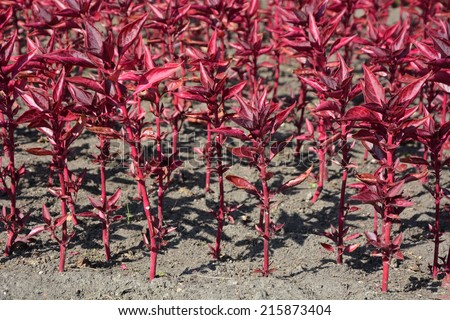 Red flowers - stock photo