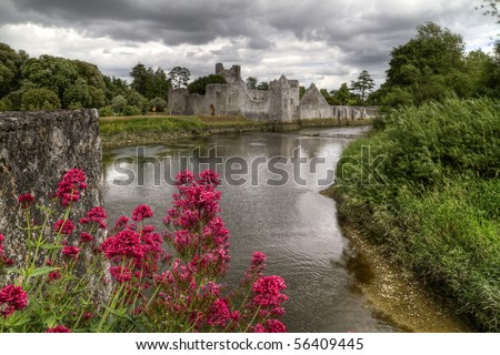 Red flowers at Adare castle - stock photo