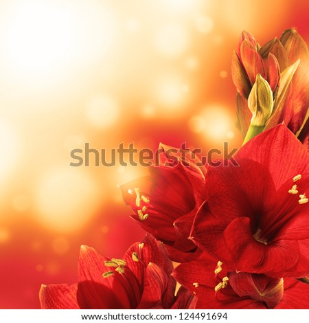 Red flowers, bouquet of gerber