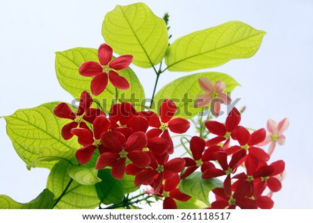 exotic red flowers stock photos, royaltyfree images  vectors, Natural flower