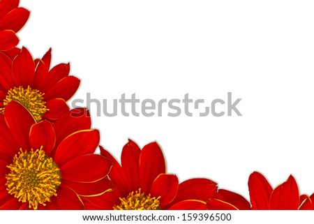 Red flowers  Frame on white background