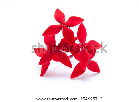 red flowers in group isolated on white background