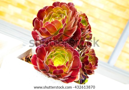 red flowers in vase outside,amazing flowers,australian nature,australian flowers,new castle,wonderful flowers,red flowers,flowers vase,city flowers,spring,natural flowers,big flowers,green ,plants - stock photo
