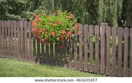 Red flowers on a fence in a green garden
