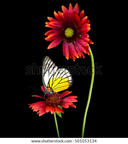 Red flowers on black background with colorful butterfly