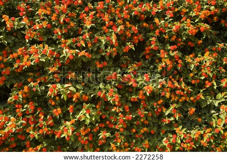 red flowers on the green leaves. background.