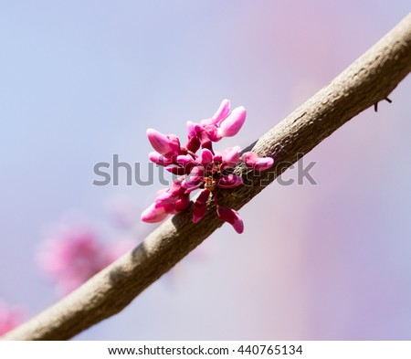 red flowers on the tree in nature - stock photo