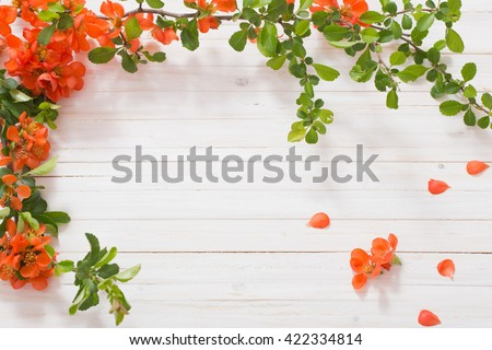 red flowers on white wooden background - stock photo