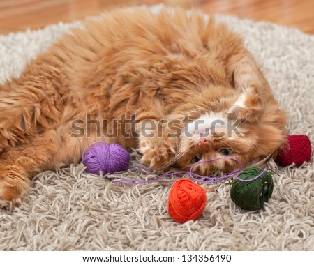 red fluffy cat playing with colored balls of yarn on a carpet - stock photo