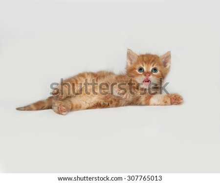 Red fluffy kitten lies on gray background