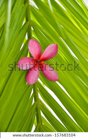 Red frangipani and palm leaf texture - stock photo
