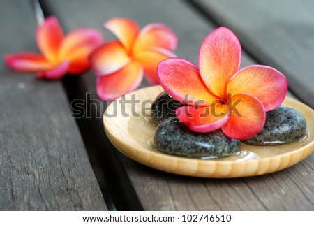 Red frangipani flower with stones. Spa & aromatherapy concept - stock photo