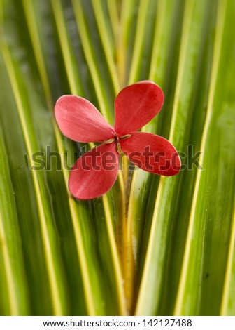 Red frangipani flowers and wet palm leaf texture - stock photo