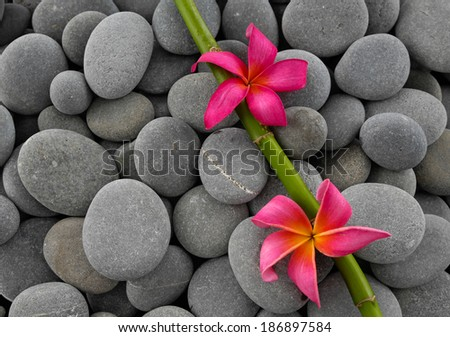 Red frangipani with bamboo grove on pebbles  - stock photo