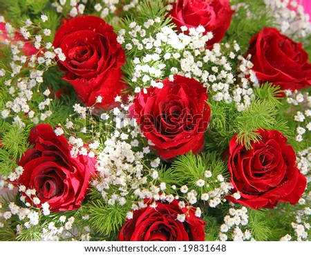 red fresh flowers with a green foliage on a white background