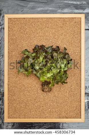 red Fresh Lettuce with Blank cork board on wooden board - stock photo
