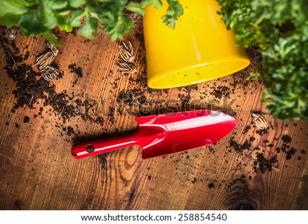 red gardening scoop on wooden background with soil, flowerpot and plant, top view - stock photo