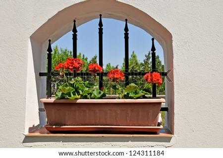 red geranium on a window ledge - stock photo
