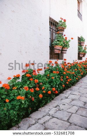 Red geranium potted flowers against a white wall