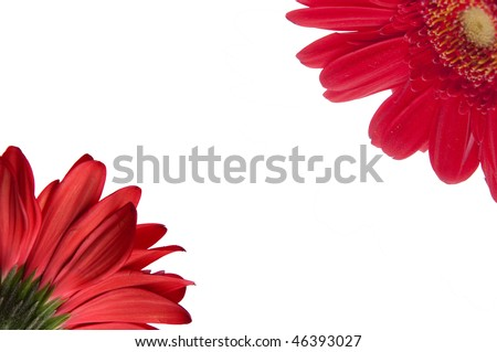 Red Gerbera Daisy Border showing the front and back of the flower.  File includes Clipping Path.