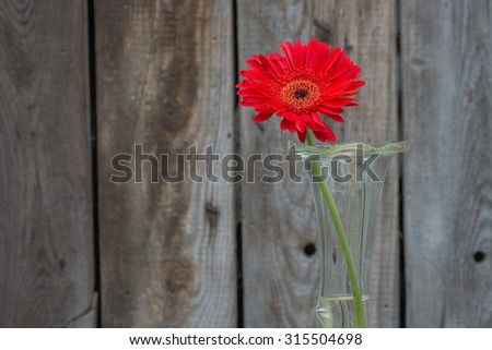 red gerbera flower in the vase close-up against wooden wall with copy-space, horizontal shot