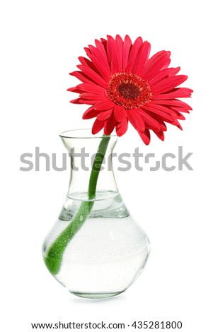 red gerbera flower in transparent vase isolated - stock photo