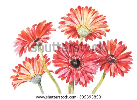 Red gerbera watercolor illustration. Hand-drawing bouquet of five red flowers isolated on white background. Floral element suitable for greeting cards.