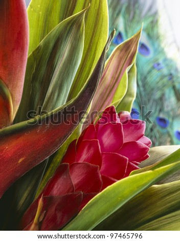 Red Ginger (Alpinia purpurata) tropical flower from Hawaii in studio setting