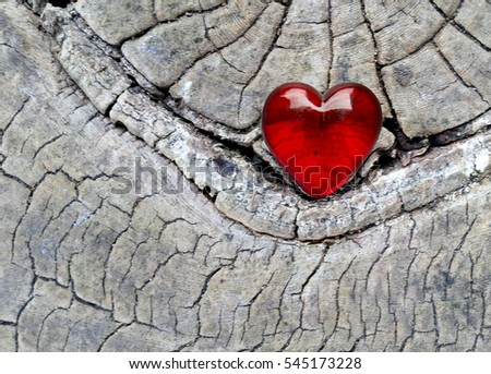 Red Glass Heart on Tree Bark