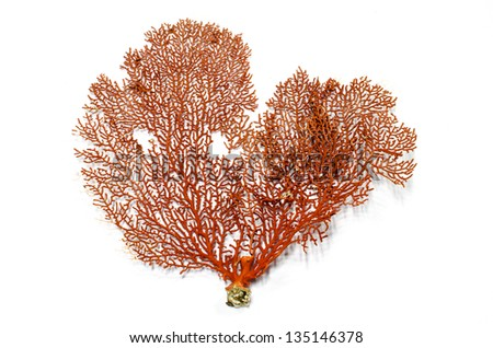 Red Gorgonian or red sea fan coral isolated on white background - stock photo