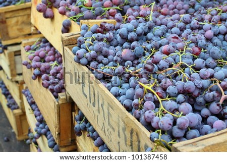 Red grapes at the local market in Valparaiso, Chile. - stock photo