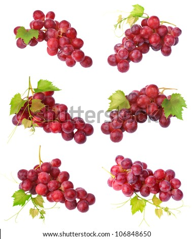Red grapes collection - stock photo