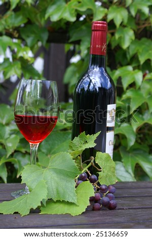 red grapes on the vine. Growing vine grapes - stock photo