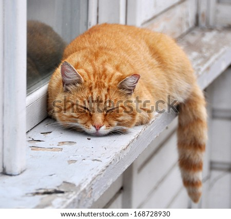 Red-haired adult cat lies on a windowsill. - stock photo