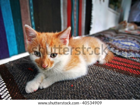 Red haired baby cat laying on a bench with rug on it
