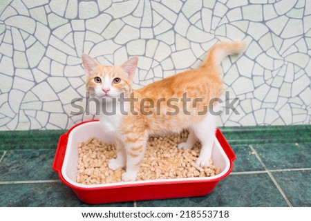 Red-haired cat in the toilet - stock photo