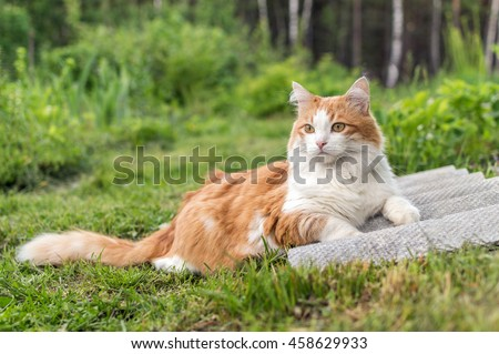 Red-haired cat with a white chest lying on green grass