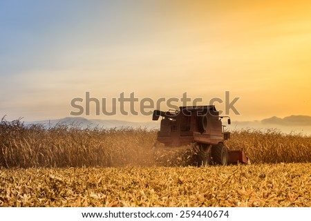 Red harvester working on corn field at sunset. Vintage effect. - stock photo