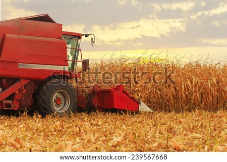 Red harvester working on corn field in autumn season - stock photo