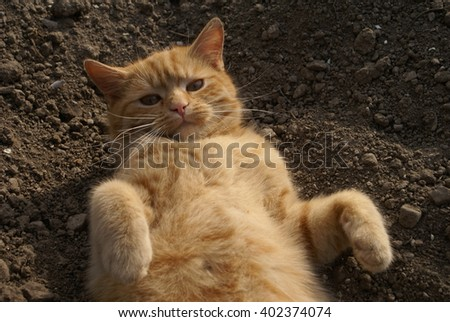 Red-headed cat - stock photo