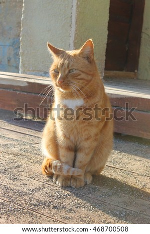 Red-headed cat is basking in the sun